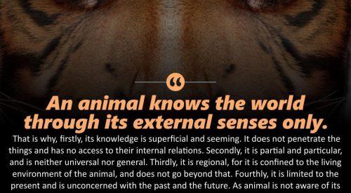 Animal Knowledge (Ayatollah Murtada Mutahhari)